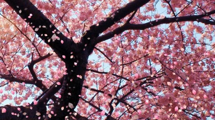 beautifull-nature-pink-pretty-spring-Favim.com-409150